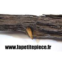 Vestige de la Grande Guerre, balle coinçée dans du bois