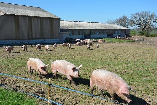 Colis de Porc fermier de l'Aveyron