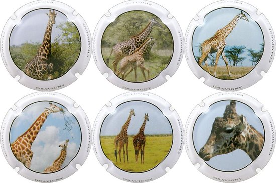 Dravigny Brigitte - Les Giraffes