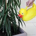 Arrosoir potager canard