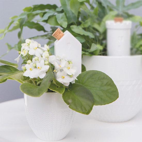 Cone d'arrosage par capillarité Maison - Porcelaine