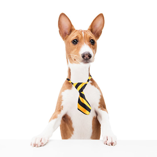 Cravate pour chien ou chat - Orange et noir