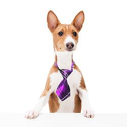 Cravate pour chien ou chat - Ecossais violet