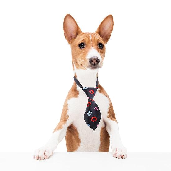Cravate pour chien ou chat - Bisous