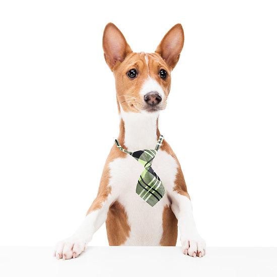 Cravate pour chien ou chat - Ecossais beige