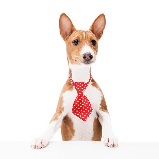 Cravate pour chien ou chat - Rouge à pois