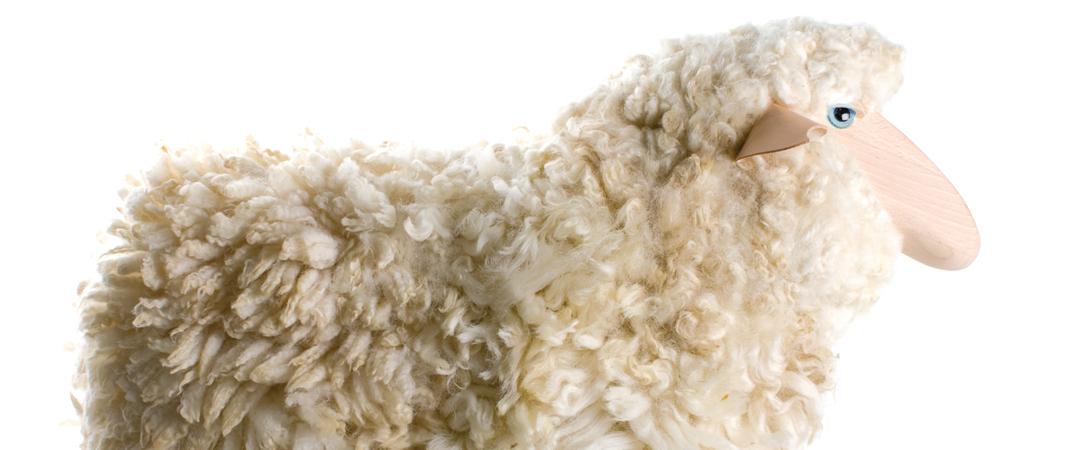 categorie-mouton-1.jpg