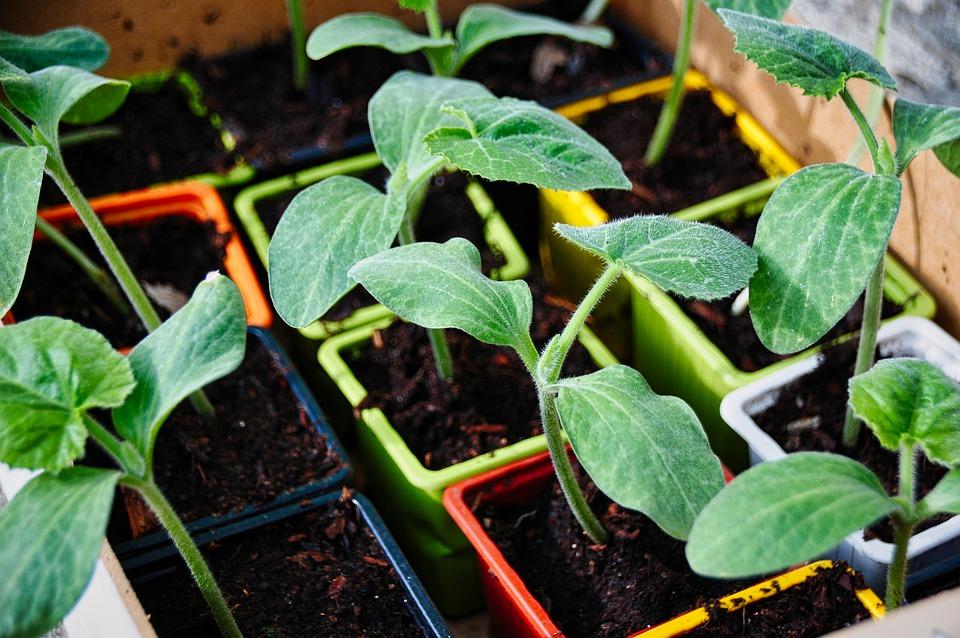 vegetable-garden-5104380_960_720.jpg