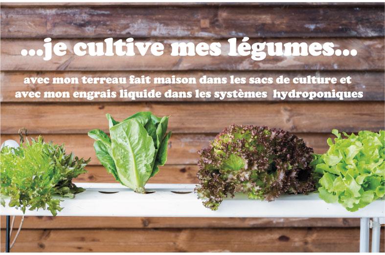 cultiver des légume sur un balcon une terrasse