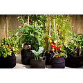 Pot potager SMART POT 75 L