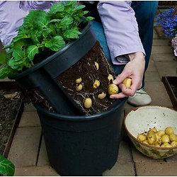 Pot pour pomme de terre