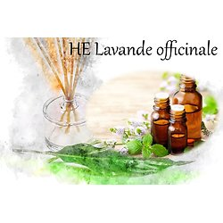 HE Lavande officinale Lavandula angustifolia