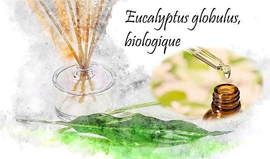 HE Eucalyptus globulus, biologique