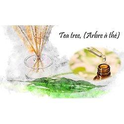 HE Tea tree, (Arbre à thé) biologique Australie