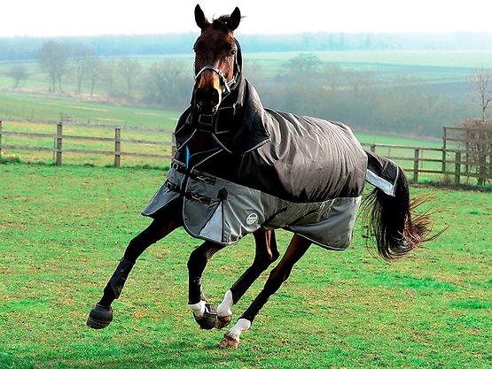 Sellerie cheval