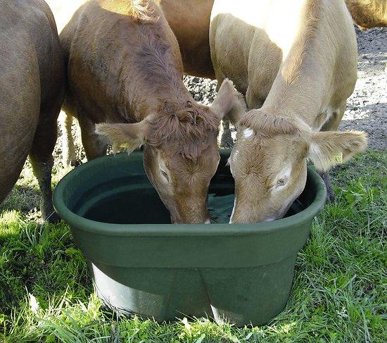 Abreuvoir de pature 380 litres