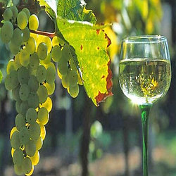 SPARKLING PEAR RIESLING