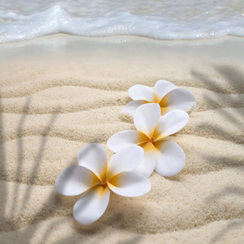PARADIS TAHITIEN