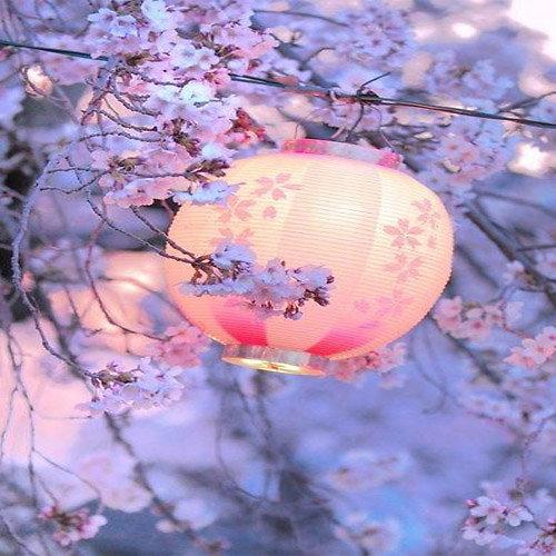 CIRE PARFUMEE JAPANESE CHERRY BLOSSOM