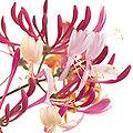 Honeysuckle - Fleurs de Bach - 20ml