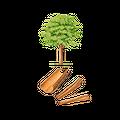 Cannelle coupée BIO - plante en vrac - herboristerie du Dr. SAMMUT
