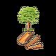 Cannelle tuyau BIO - plante en vrac - herboristerie du Dr. SAMMUT