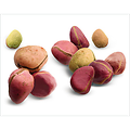 Colatier ou Kolatier BIO - plante en vrac - herboristerie du Dr. SAMMUT