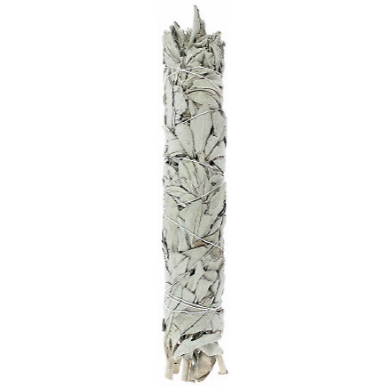 Sauge blanche - Salvia apiana - 12cm