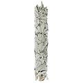 Ballotin sauge blanche - Salvia apiana - 12cm