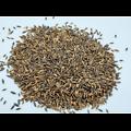 Avoine BIO - plante en vrac - herboristerie du Dr. SAMMUT