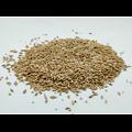 Orge BIO - plante en vrac - herboristerie du Dr. SAMMUT