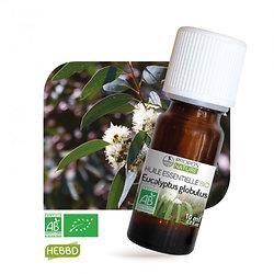 Eucalyptus globulus BIO - Huile Essentielle - Propos nature - 10ml