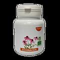 Gélules échinacée - herboristerie du Dr. SAMMUT - 90 gélules