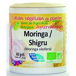 Shigru / Moringa - 60 gélules