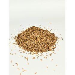 Cumin BIO - plante en vrac - herboristerie du Dr. SAMMUT