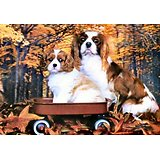 POSTER RELIEF/POSTER 3D/CAVALIER KING CHARLES/CHIEN