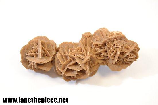 Gypse Rose des sables 16cm