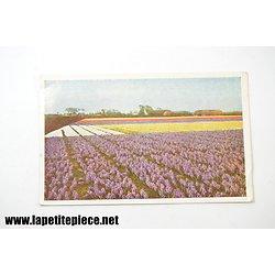 OMGEVING Keukenhof Lisse-Holland