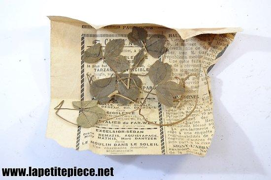 Lot de trèfles à quartes feuilles, années 1930 - 1950