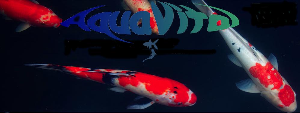Aquavital_bassin.png