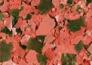 Paillettes Tanganyika