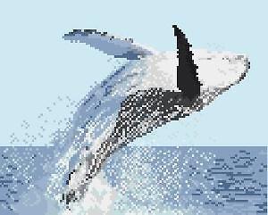 Baleine à bosse diagramme noir et blanc