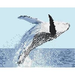 Baleine à bosse diagramme noir et blanc .pdf