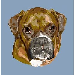 Boxer diagramme couleur .pdf