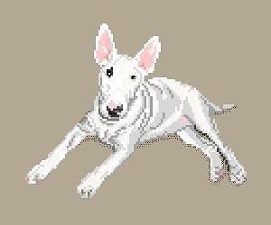 Bull terrier diagramme couleur
