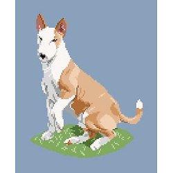 Bull terrier II diagramme couleur