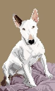 Bull terrier III diagramme couleur