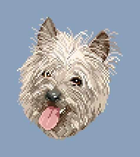 Cairn terrier diagramme couleur