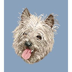 Cairn terrier diagramme couleur