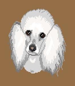 Caniche blanc diagramme couleur